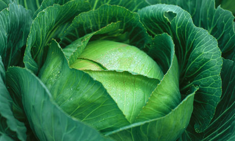 Cabbage-close-up-006