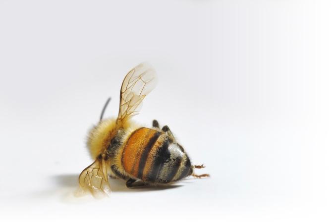 dead-bee-fade
