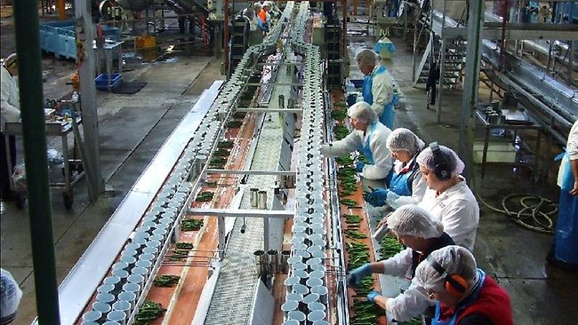 426086-110720-asparagus-factory-asparagus-canning-factory