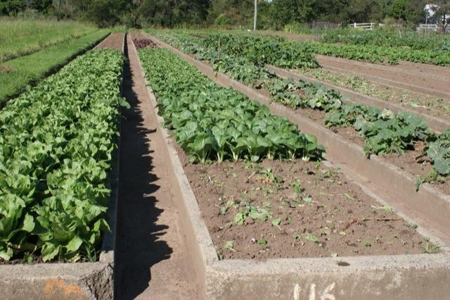 market-gardeners-beds