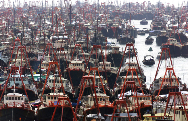 oceans_impacts_seas_degradation_commercial_fishing_trawlers_overfishing_q_48918