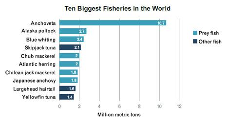 overfishing20prey20fish